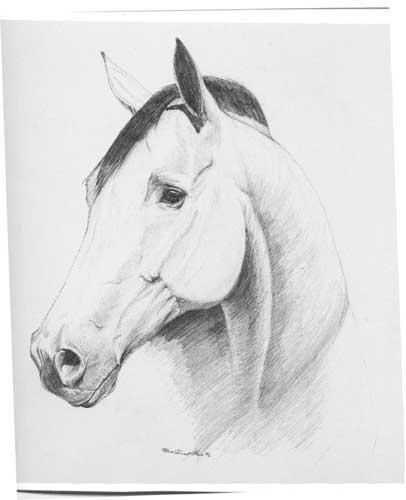 Quarter Horse Drawings