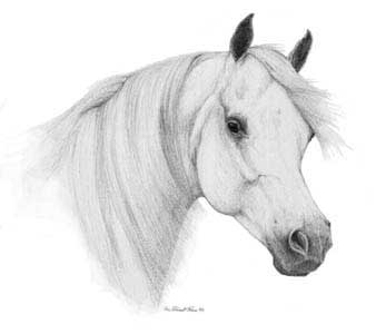 Black horse head drawing - photo#14
