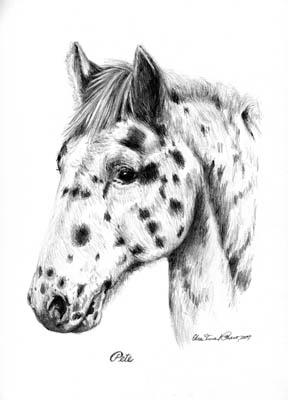 Horse Portraits Custom Portraits In B Amp W Graphite Pencil