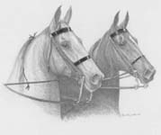 saddlebreds